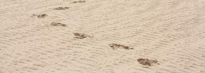 Jalanjälkiä hiekassa